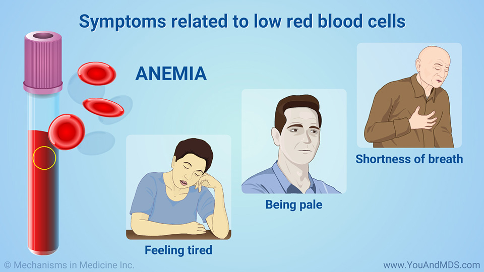 Symptoms related to low red blood cells