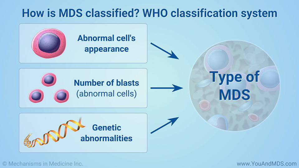 How is MDS classified? WHO classification system