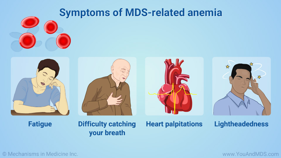 Symptoms of MDS-related anemia