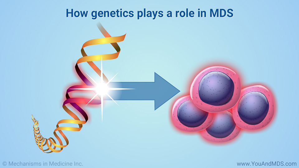 How genetics plays a role in MDS
